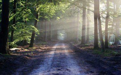 Salmo 84 – Mostrai-nos, ó Senhor, Vossa bondade